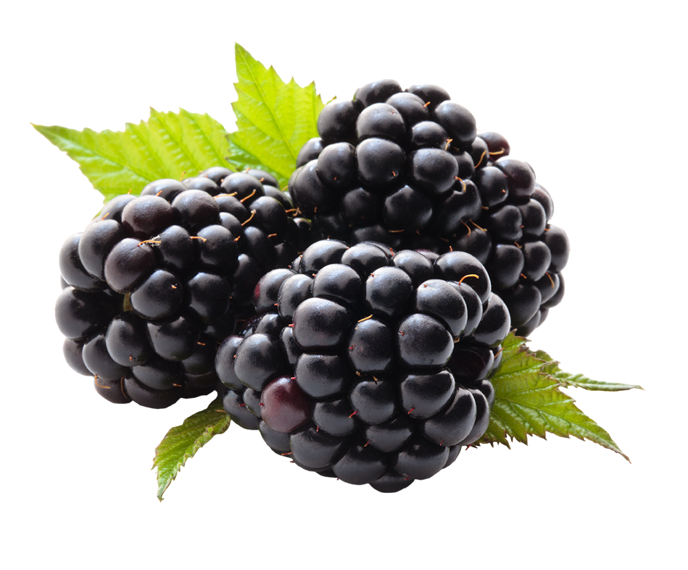 Blackberries – Berry Dealer